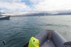 Zodiac boat whale watching in Akureyri